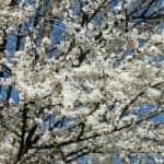 Наговештај пролећа
