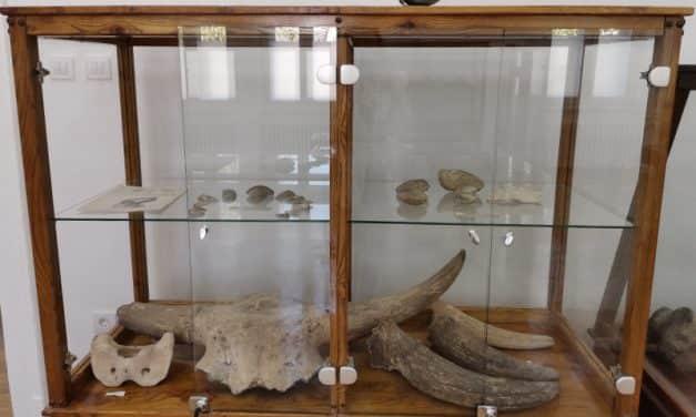Музеј у Бачкој Паланци има стопу културног добра