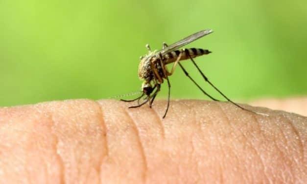 Сузбијање ларви комараца